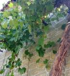 Виноделы Крыма и Краснодарского края выпустят вино в честь Керченского моста